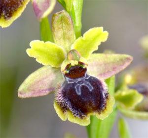 orchidees 2018 au jardin des plantes