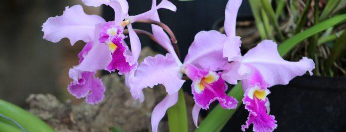 exposition mille et une orchidees 2018 au jardin des plantes