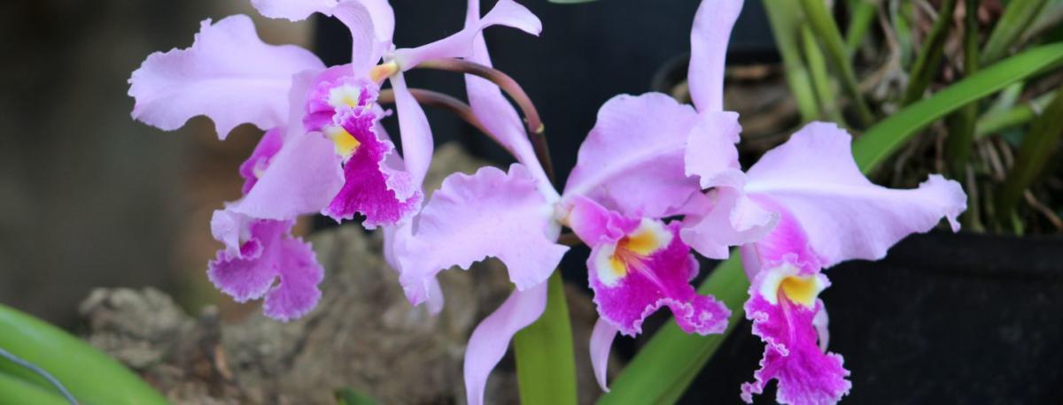 Le conte des mille et une orchidées au Jardin des Plantes - We Culte ...