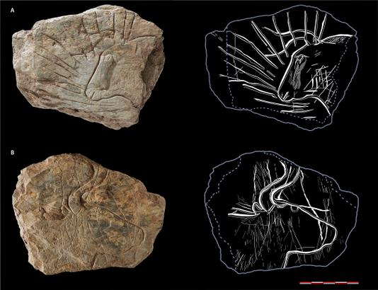 fouilles archeologiques bretagne aurochs
