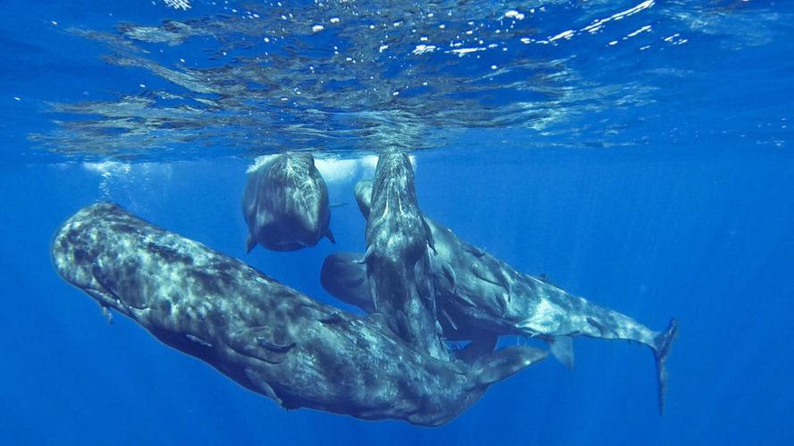 exposition baleinopolis