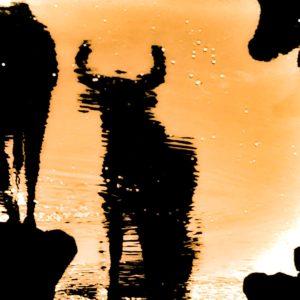 christophe airaud photo taureau