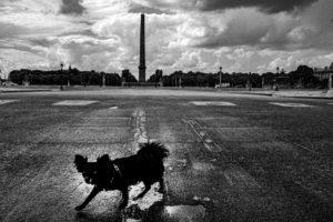 photo le chien d'ariel christophe airaud